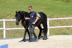 Mann im Teambuilding mit Pferden