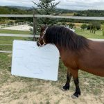 Pferd im Pfedecoaching